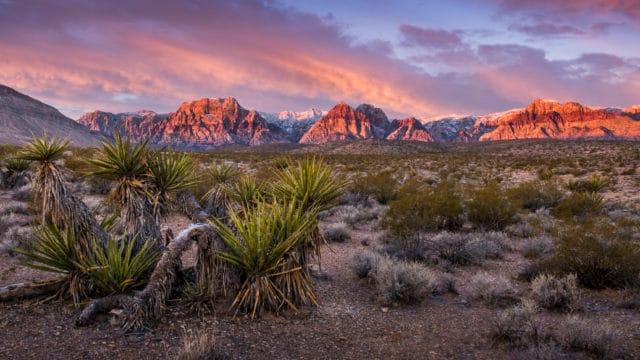 Millionaire Will Build Blockchain Smart City in Nevada