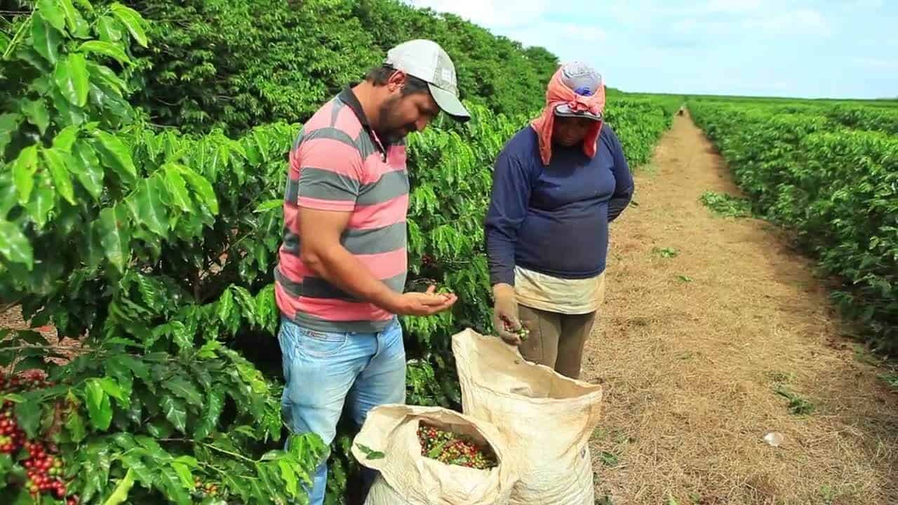 Brazil's Countryside Farmers Will Now Use a Crypto Coffee Coin