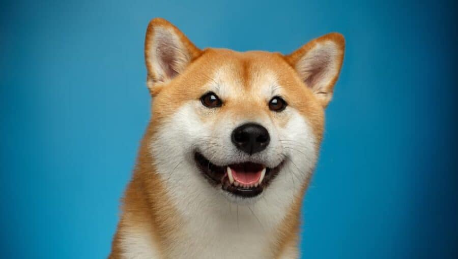 Dogecoin Slips 4.5% to $0.304 – Where to Buy DOGE Weekend Dip